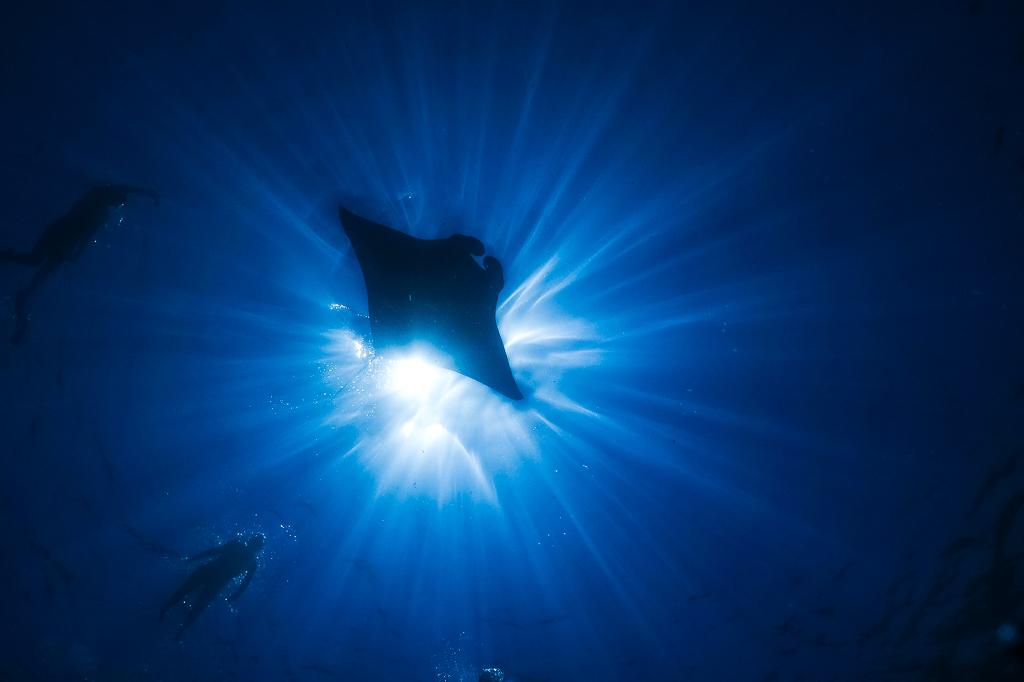 wildlife-encounters-in-the-ocean